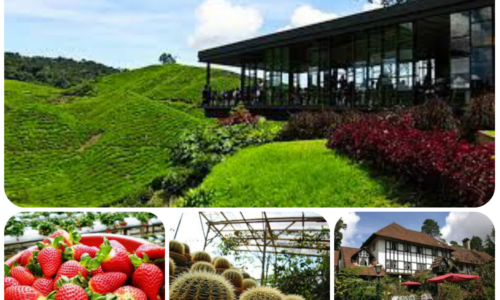 配套PK05     2天1晚      金马伦高原    2 DAYS 1 NIGHT CAMERON HIGHLAND